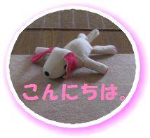 IMG_6642.jpg