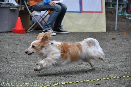 dogsportfes01.jpg