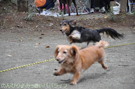 dogsportfes02.jpg