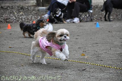 dogsportfes03.jpg