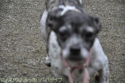 dogsportfes04.jpg