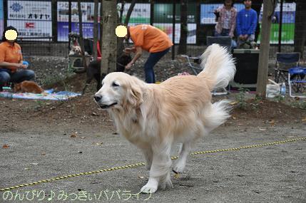 dogsportfes05.jpg
