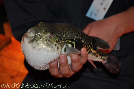 fugu111.jpg