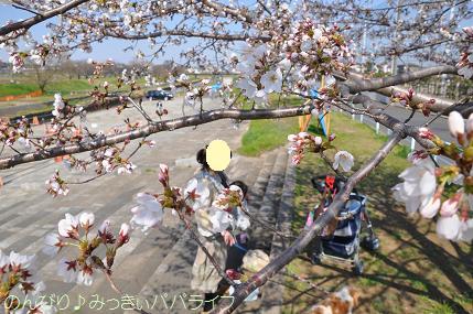 hanami201201.jpg