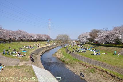 hanami201203.jpg