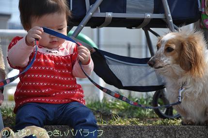 hanami201204.jpg