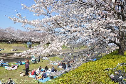 hanami201205.jpg