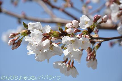 hanami201206.jpg
