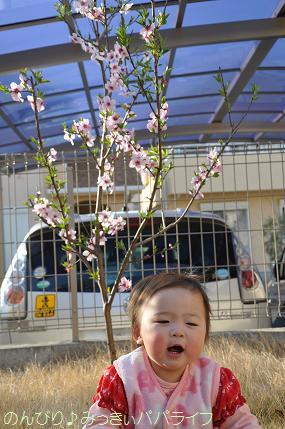 hanami201210.jpg