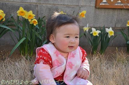 hanami201211.jpg
