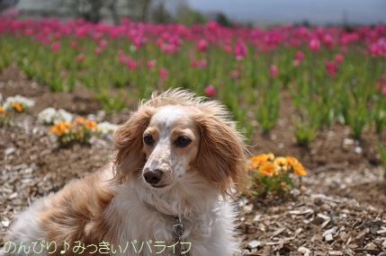 hananomiyako2.jpg