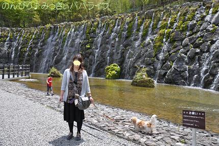 hananomiyako9.jpg