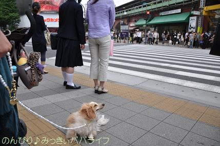 hibiyasaro10.jpg