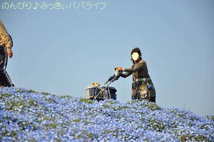 hitachikaihin4.jpg