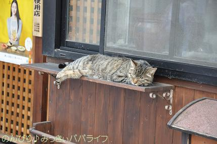 kawagoe120.jpg
