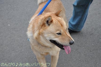 kawagoe126.jpg