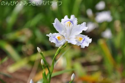 kichijoji21.jpg