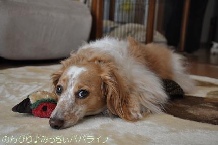omiyageusa7.jpg