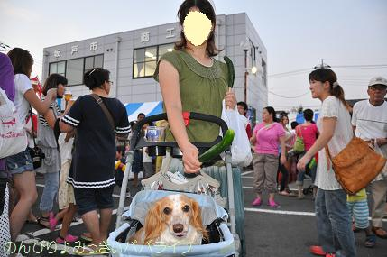 sakadoyosakoi201010.jpg