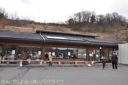 shiitake1.jpg