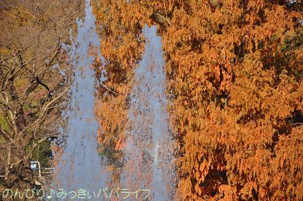 shinrin20101110.jpg