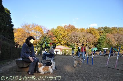 shinrin2010118.jpg