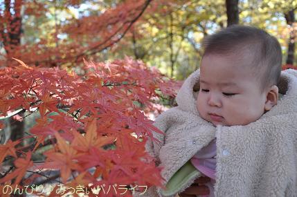 shinrinmata03.jpg