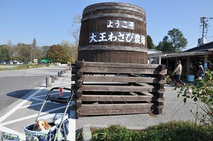 shinshu007.jpg