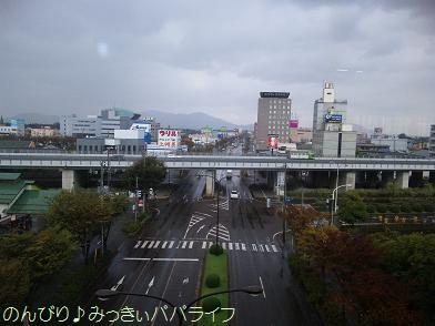 shokuyougiku1.jpg