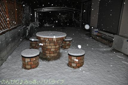 snow2010feb10.jpg