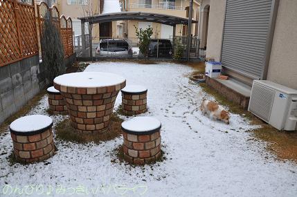 snow2010feb4.jpg