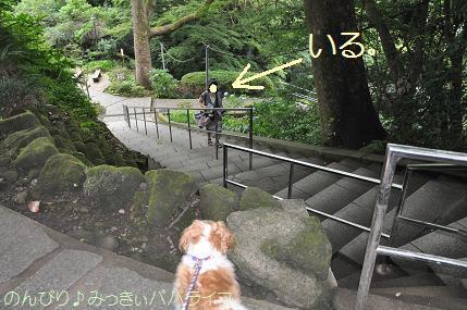 tateyama20117011.jpg