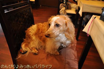 tateyama20117057.jpg