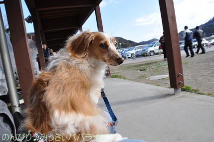 tateyama201202005.jpg