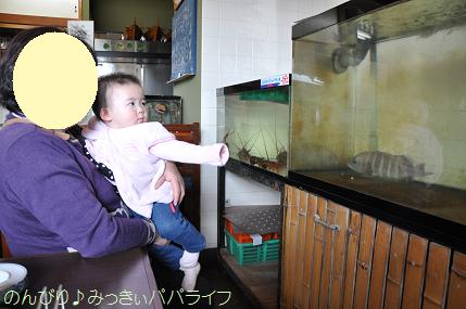 tateyama201202021.jpg