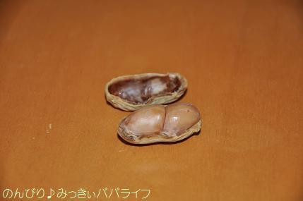 tateyama201202033.jpg