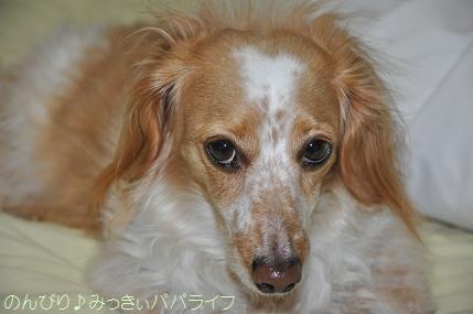 tateyama201202056.jpg