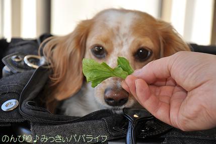 toyosu20110109.jpg
