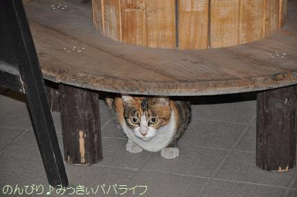 yakitori2010sep05.jpg