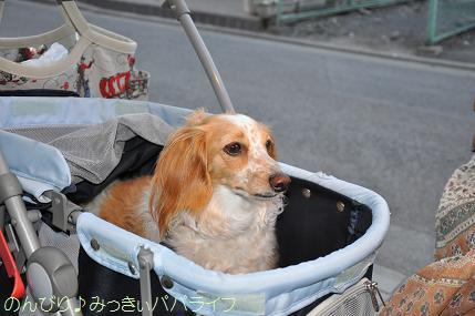 yakitori304.jpg