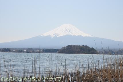 yamanaka010.jpg
