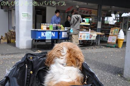 yoyogi3.jpg