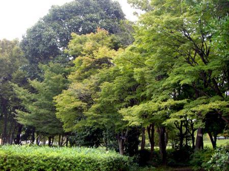 CIMG2719-20081003.jpg