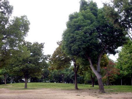 CIMG2736-20081003.jpg
