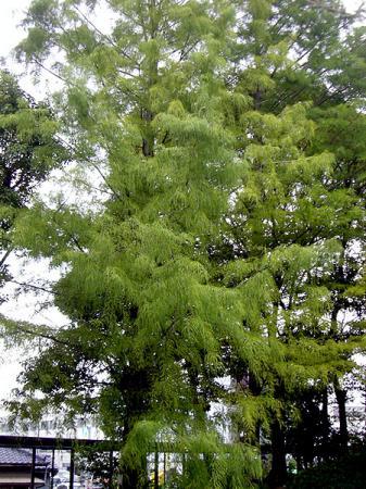 CIMG2740-20081003.jpg