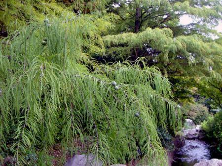 CIMG2742-20081003-2.jpg
