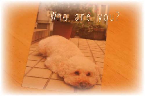 あなただれ?