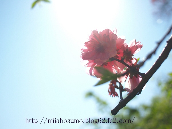 1-2009_04150065-s.jpg