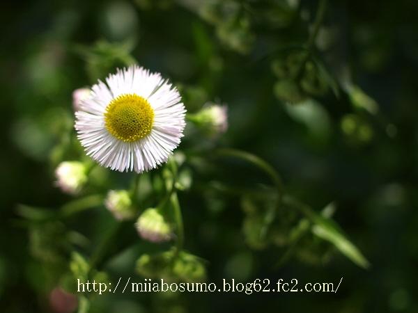 1-2009_04150075-s.jpg