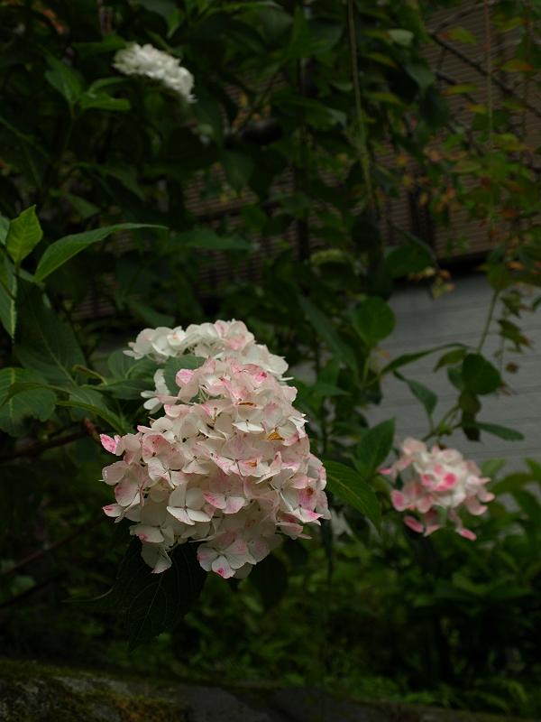 2009_06130021-s.jpg